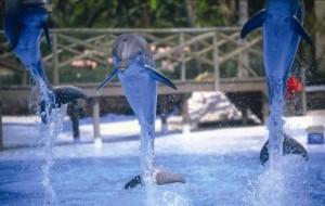 Costa del Sol tourist attractions - Marine life