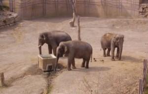 Costa del Sol tourist attractions - Wildlife
