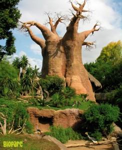 Bioparc Fuengirola Zoo - Baobab Tree