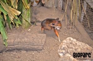 Bioparc Fuengirola Zoo - Baby Deer
